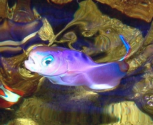 Die Sch 246 Nsten Aquarium Fische S 252 223 Wasser Zuhause Image Idee