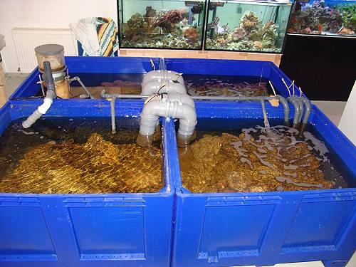 meereswasser grundeln für anfänger