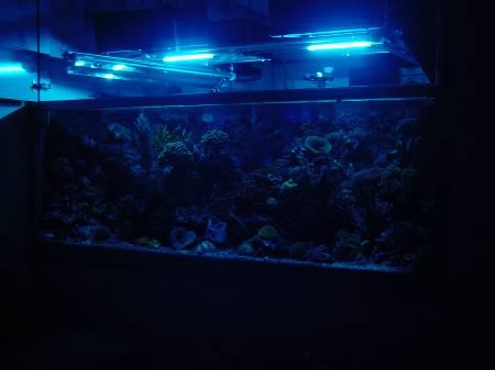 mingdak led aquarium licht kit f r fischtank unterwasser. Black Bedroom Furniture Sets. Home Design Ideas