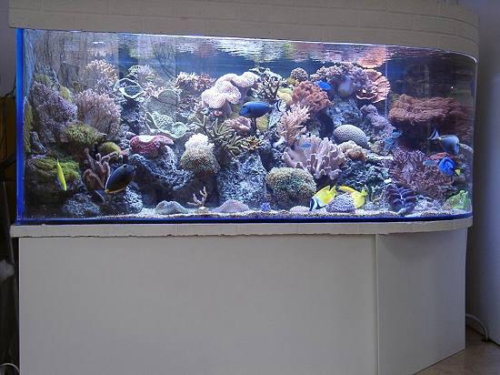Das Aquarium Von Markus Emge