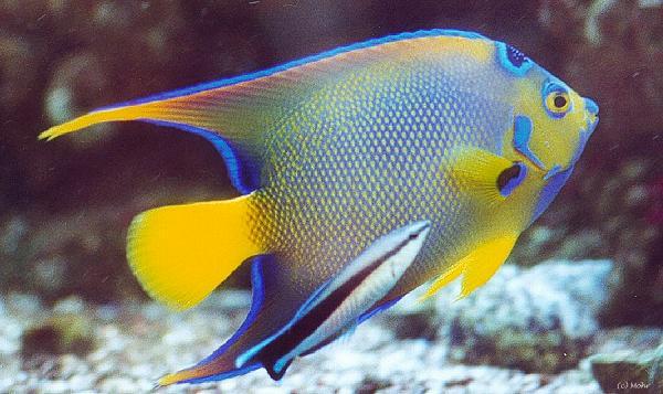 Fischaquarium pflegeleicht oder for Fisch bilder