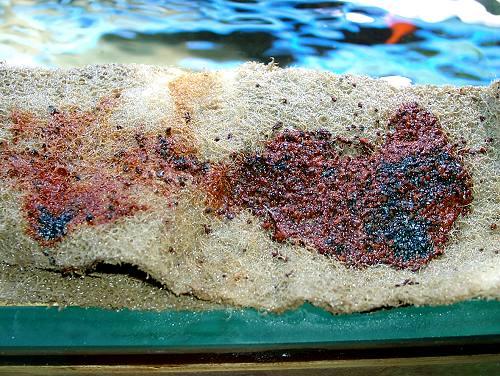 phosphatreduzierung im aquarium wie entfernt man heute zuverl ssig phosphat aus dem. Black Bedroom Furniture Sets. Home Design Ideas